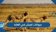 حيوانات تعيش في الغابة وفي الصحراء مع الصور