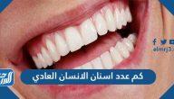كم عدد اسنان الانسان العادي