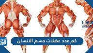 كم عدد عضلات جسم الانسان؟ وما هي أنواعها ووظائفها؟