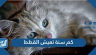 كم سنة تعيش القطط