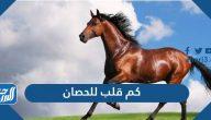 كم قلب للحصان
