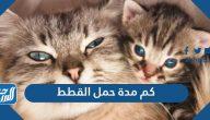 كم مدة حمل القطط