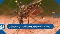 من الحشرات الضارة البعوض وقد ورد ذكرها في القران الكريم