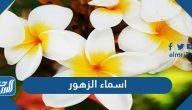 اسماء الزهور النادرة بالعربي والانجليزي ومعانيها بالصور