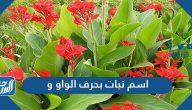 اسم نبات بحرف الواو و