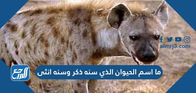 ما اسم الحيوان الذي سنه ذكر وسنه انثى