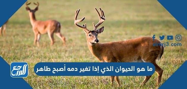 ما هو الحيوان الذي إذا تغير دمه أصبح طاهر