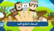 اسماء اصابع اليد ومعانيها بالعربية والانجليزية مع الصور