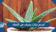 اسم نبات بحرف ص الصاد