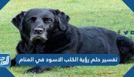 تفسير حلم رؤية الكلب الأسود في المنام لابن سيرين والنابلسي