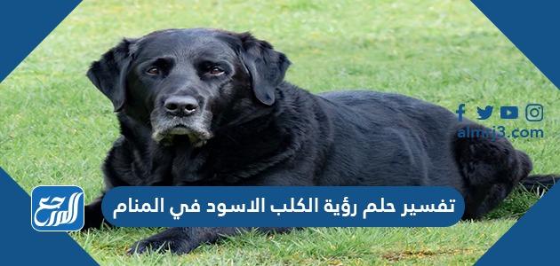 تفسير حلم رؤية الكلب الأسود في المنام