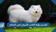 تفسير رؤية الكلب الأبيض في المنام للعزباء والمتزوجة والحامل والمطلقة