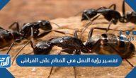 تفسير رؤية النمل في المنام على الفراش لابن سيرين وابن شاهين والنابلسي