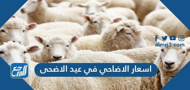 اسعار الاضاحي في عيد الاضحى 2021 السعودية