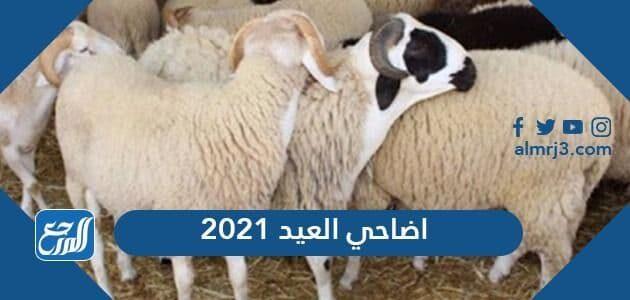 اضاحي العيد 2021 في السعودية ، الأسعار وأماكن البيع 1442