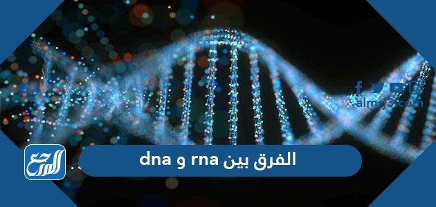 الفرق بين dna و rna
