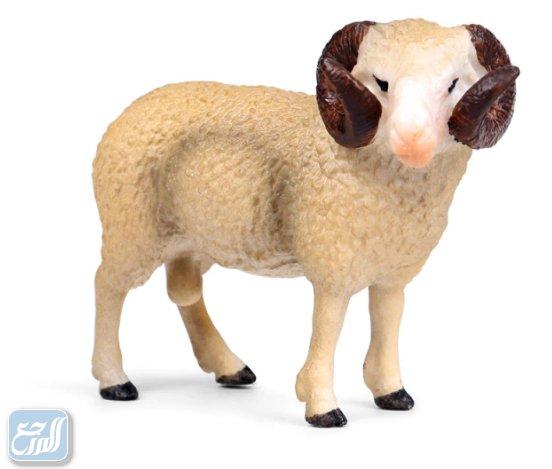 أجمل سكرابز خروف عيد الأضحى