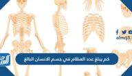 كم يبلغ عدد العظام في جسم الانسان البالغ