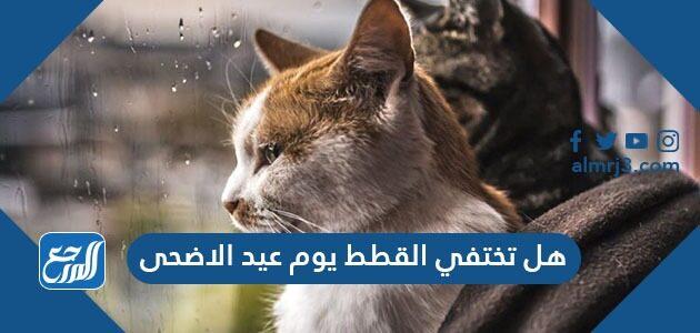 هل تختفي القطط يوم عيد الاضحى