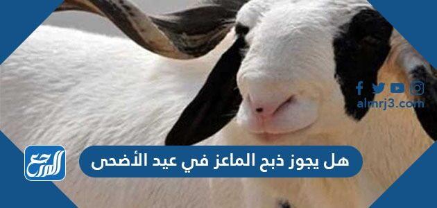 هل يجوز ذبح الماعز في عيد الأضحى