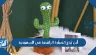 أين تباع الصبارة الراقصة في السعودية