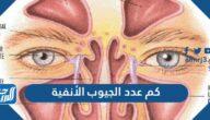 كم عدد الجيوب الأنفية الموجودة في جسم الإنسان وما اشهر امراضها