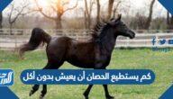 كم يستطيع الحصان أن يعيش بدون أكل