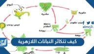 كيف تتكاثر النباتات اللازهرية