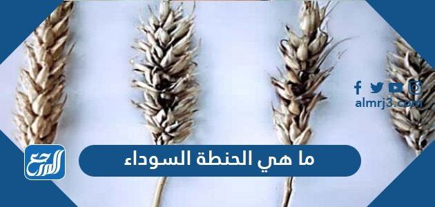 ما هي الحنطة السوداء