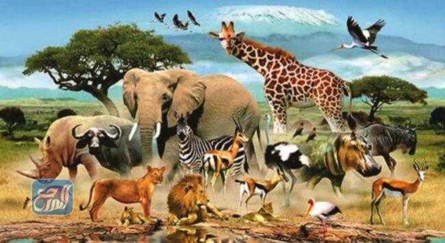 كيف أبحث عن الحيوانات في موطنها الطبيعي
