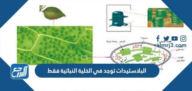 البلاستيدات توجد في الخلية النباتية فقط