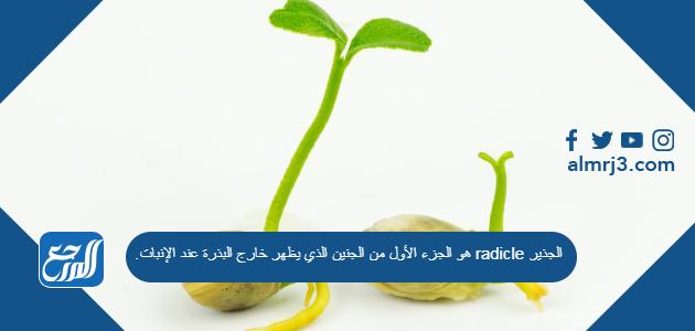 الجذير radicle هو الجزء الأول من الجنين الذي يظهر خارج البذرة عند الإنبات.