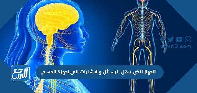 الجهاز الذي ينقل الرسائل والاشارات الى أجهزة الجسم
