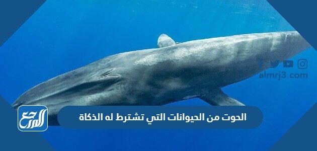الحوت من الحيوانات التي تشترط له الذكاة