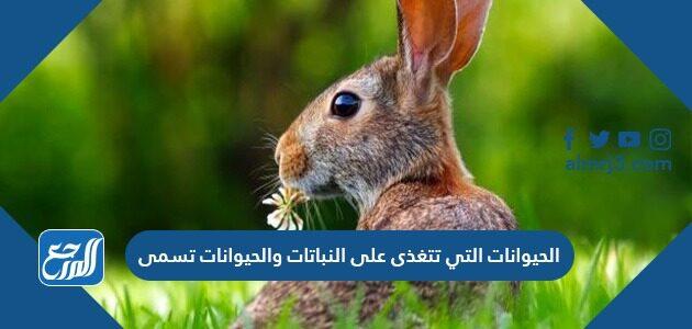 الحيوانات التي تتغذى على النباتات والحيوانات تسمى
