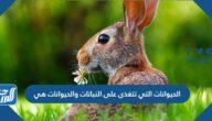 الحيوانات التي تتغذى على النباتات والحيوانات هي