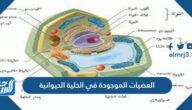 العضيات الموجودة في الخلية الحيوانية