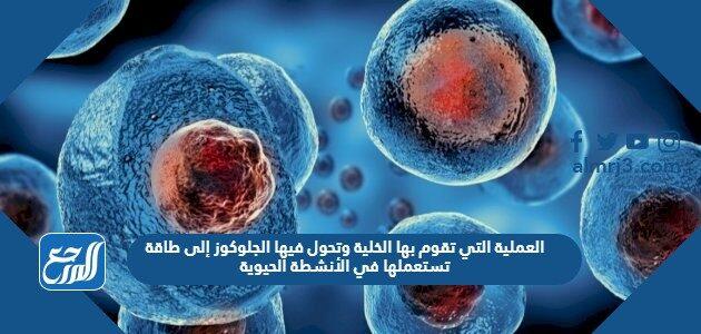 العملية التي تقوم بها الخلية وتحول فيها الجلوكوز إلى طاقة تستعملها في الأنشطة الحيوية