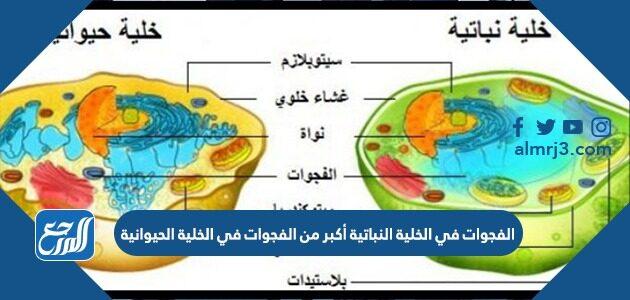 الفجوات في الخلية النباتية أكبر من الفجوات في الخلية الحيوانية