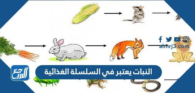 النبات يعتبر في السلسلة الغذائية
