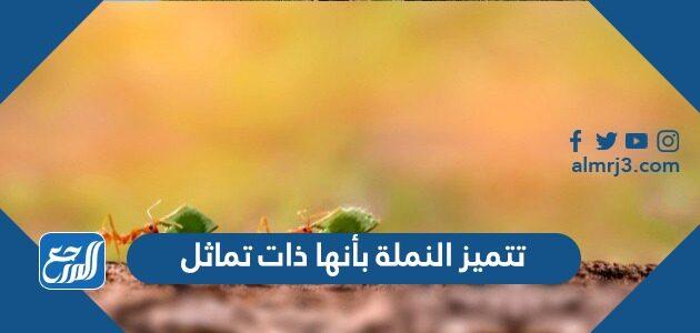 تتميز النملة بأنها ذات تماثل