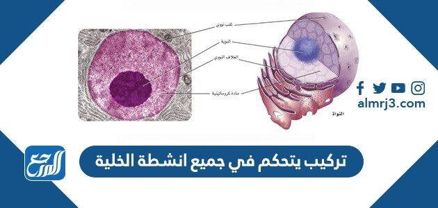 تركيب يتحكم في جميع انشطة الخلية