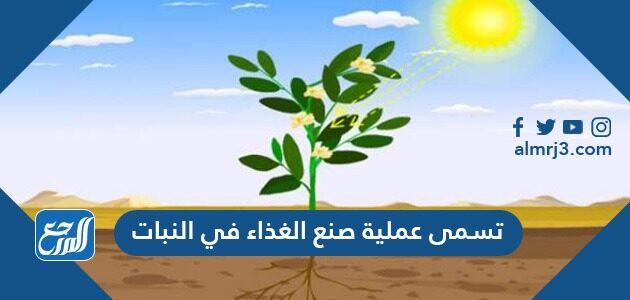 تسمى عملية صنع الغذاء في النبات