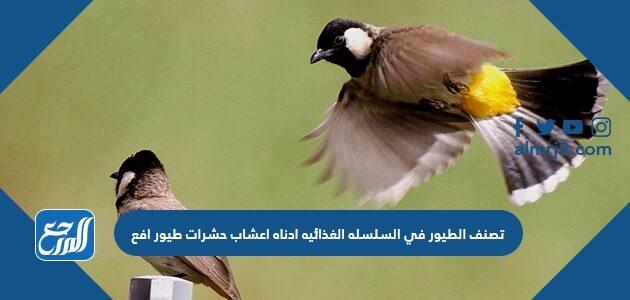 تصنف الطيور في السلسله الغذائيه ادناه اعشاب حشرات طيور افع