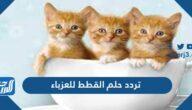 تفسير حلم القطط للعزباء في المنام للعزباء والمتزوجة والحامل