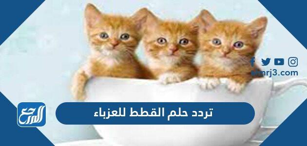 تفسير حلم القطط للعزباء