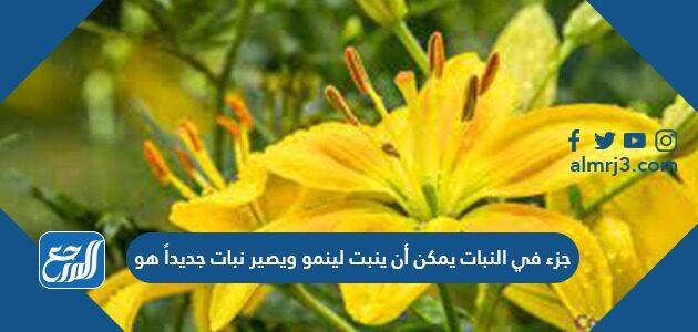 جزء في النبات يمكن أن ينبت لينمو ويصير نبات جديداً هو