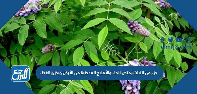 جزء من النبات يمتص الماء والأملاح المعدنية من الأرض ويخزن الغذاء
