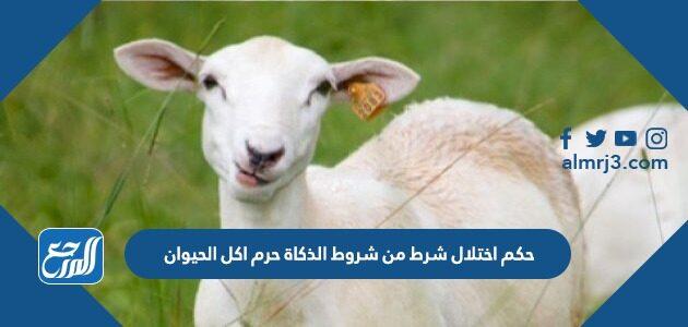 حكم اختلال شرط من شروط الذكاة حرم اكل الحيوان