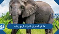 حل لغز ما هو الحيوان الذي له اربع ركب